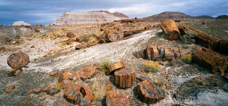 Il Petrified Forest National Park, Arizona, USA